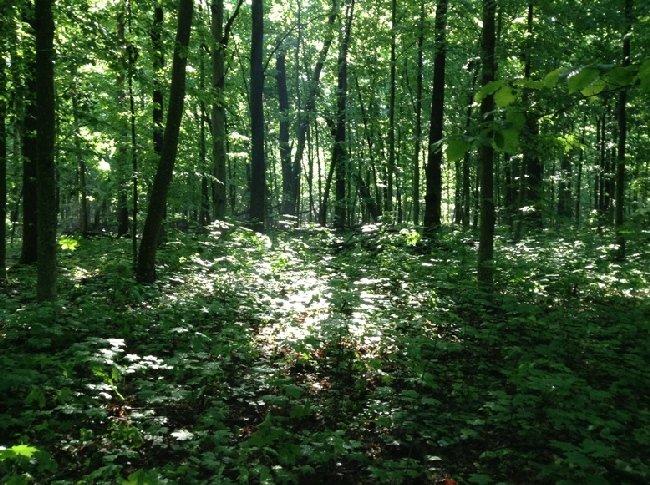 В Олевському районі лісгосп спрямував понад півмільйона гривень на профілактику виробничого травматизму та безпеку умов праці