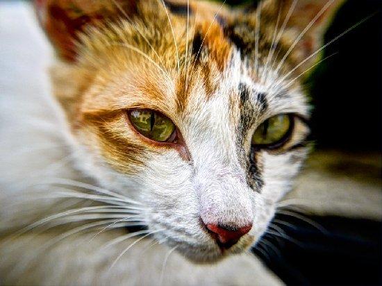 """Петиція про """"легалізацію"""" вуличних котів набрала більше півсотні потрібної кількості голосів за місяць"""