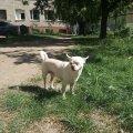 У Житомирі загубився песик. ФОТО