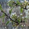 На житомирян цього тижня очікує примхлива погода: буде тепло, але йтиме невеликий дощ