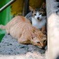Житомиряни просять дозволити визнати котів частиною екосистеми міста
