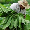 Ученые неожиданно заявили о пользе табака