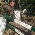 Масове переселення комах: житомирські лісники показали, як борються зі шкідниками у поліських лісах. ФОТО