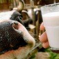 Не пийте, діти, молоко, будете здорові: 6 причин виключити цей продукт з раціону
