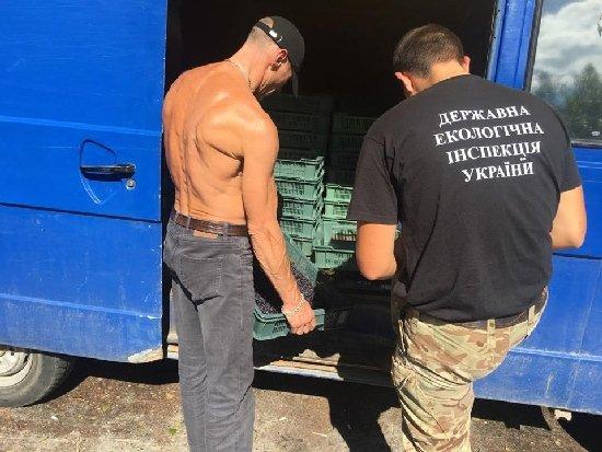 На Житомирщині більше 10 осіб отримали штраф за те, що продавали зібрану чорницю, – екологи
