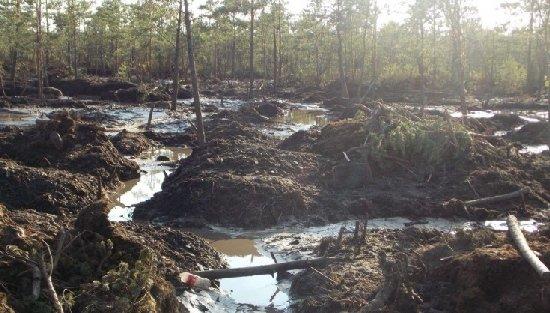 Депутати хочуть продати 94 га землі в Ємільчинському районі для видобутку бурштину