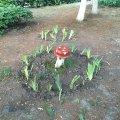 У Житомирському агроекологічному університеті почали вирощувати мухомори. ФОТО