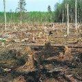 У Коростенському районі лісник незаконно продав ліс на суму 100 тис. грн