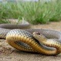 17-річного жителя Житомирського району у власному обійсці за спину вкусила змія