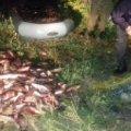 У Житомирі бійці АТО впіймали браконьєрів та повідомили інспекцію. Вилучено понад 100 кг риби