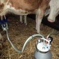 До кінця червня селянам Житомирської області обіцяють перерахувати 1 млн грн за доїльні апарати