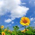 Житомирські синоптики прогнозують ще три дні спеки, а потім грози та зниження температури