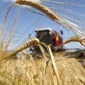 У Новоград-Волинському районі спіймали фермера, який зібрав пшеницю з чужого поля. Загрожує в'язниця