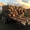 На кордоні двох районів патрульні зупинили водія вантажівки, що незаконно вивозив сосну