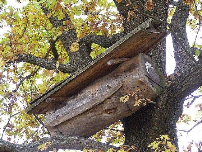 У Поліському заповіднику є вулик, якому – півстоліття, – лісники