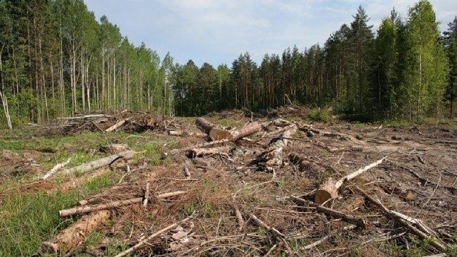 Нардепи запровадили кримінальну відповідальність за вивезення лісу