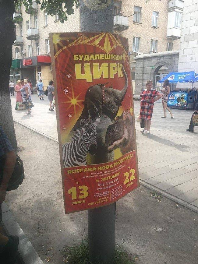 У Житомирі пропонують заборонити пересувні цирки