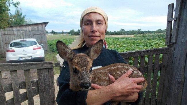 На Житомирщині у подружжя живе оленятко, якого привів з лісу домашній пес. ФОТО