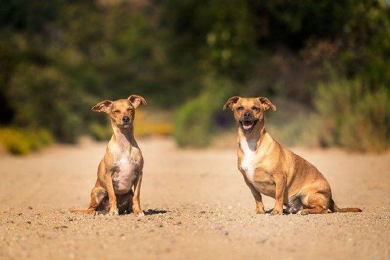 Через інциденти з вбивством тварин у Житомирі хочуть створити службу, яка їх рятуватиме