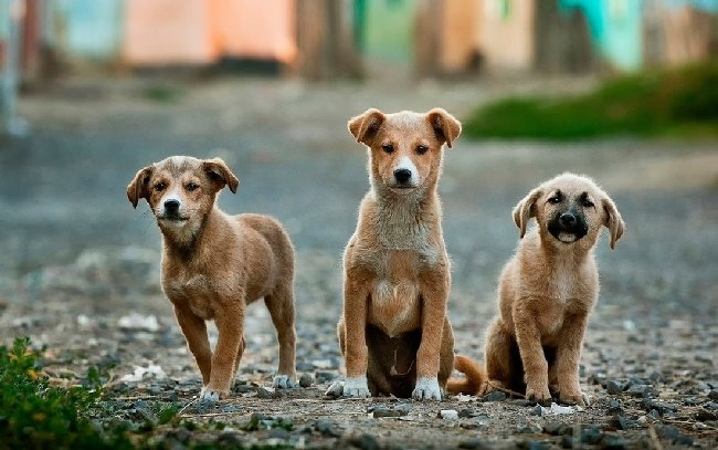 У Житомирі вийдуть на акцію протесту проти вбивства бездомних тварин