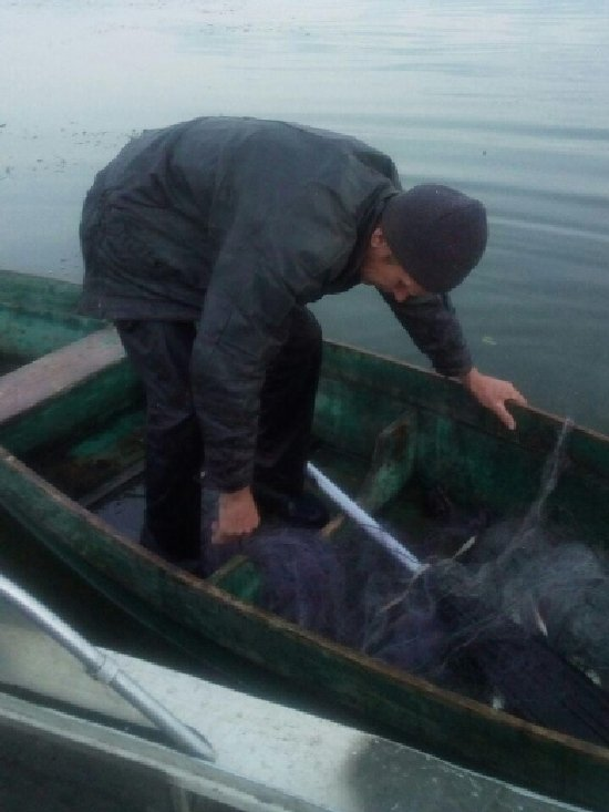 На Житомирщині за останній тиждень браконьєри завдали збитків бюджету на 42 тис. грн