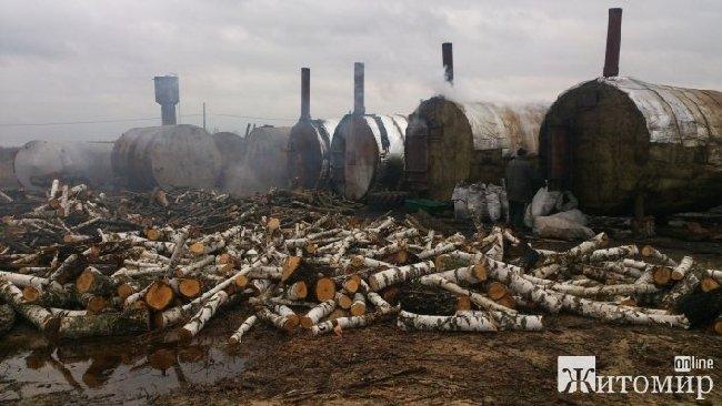 У Лугинському районі незаконно зрубаних 20 дерев вільхи знайшли на підприємстві з випалювання деревного вугілля