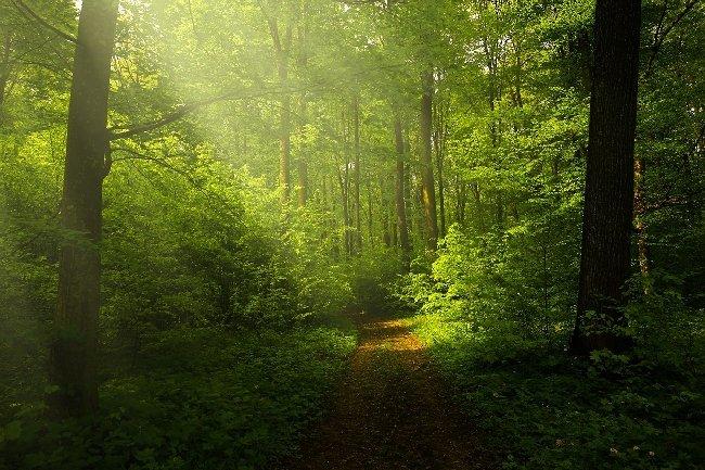 Житомирська РДА незаконно віддала у власність 59 громадянам 2,4 га лісу в Зарічанах