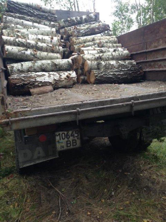 У Баранівському районі мешканці незаконно зрізали дерев на 40 тис. грн. ФОТО