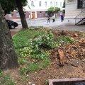 """Коли """"зеленбудівці"""" заберуть купу сміття у центрі Житомира? ФОТО"""
