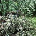 На Житомирщині фронтмену українського гурту деревом знесло автомобіль