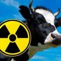 На Житомирщині було виявлено радіоактивне молоко