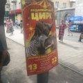Петиція про заборону пересувних цирків у Житомирі за майже тиждень набрала необхідну підтримку