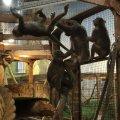 """Житомирянка рекомендує припинити діяльність контактного зоопарку у """"Глобалі"""""""