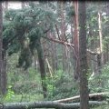 В одному з лісових масивів Житомирської області дерево впало на робітника, чоловік помер у реанімації