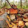 У Житомирській області знайшли мертвою жінку, яка пішла до лісу по гриби
