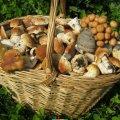 Житомирською областю прокотилася хвиля отруєнь дикорослими грибами