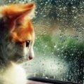 Погода в Житомире и Житомирской области на пятницу, 27 июля