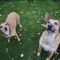 Житомиряни вимагають убивати безпритульних собак, у міськраді кажуть, що це – негуманно