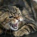 У селі Житомирської області виявили хворого на сказ кота, якого жінка привезла з Вінниччини