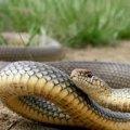 В Коростенському районі жінку, яка збирала гриби в лісі, вкусила змія