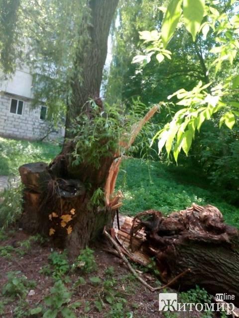 Масовий обвал дерев на площі Польовій у Житомирі. ФОТО