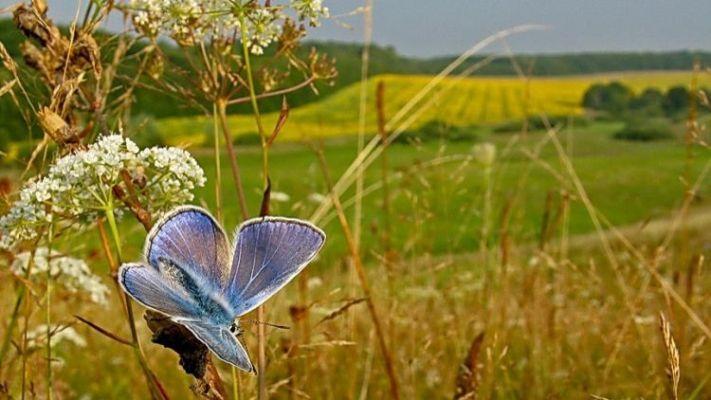 Что придет на смену дождям в Украину: синоптики дали прогноз погоды на август