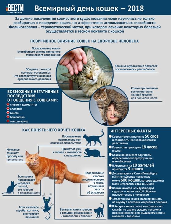 Зачем гладить кошек - удивительные полезности для человека