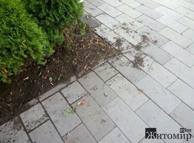"""""""Зеленбуд"""" у Житомирі прополов клумби і покосив траву, а прибрати за собою забув. ФОТО"""