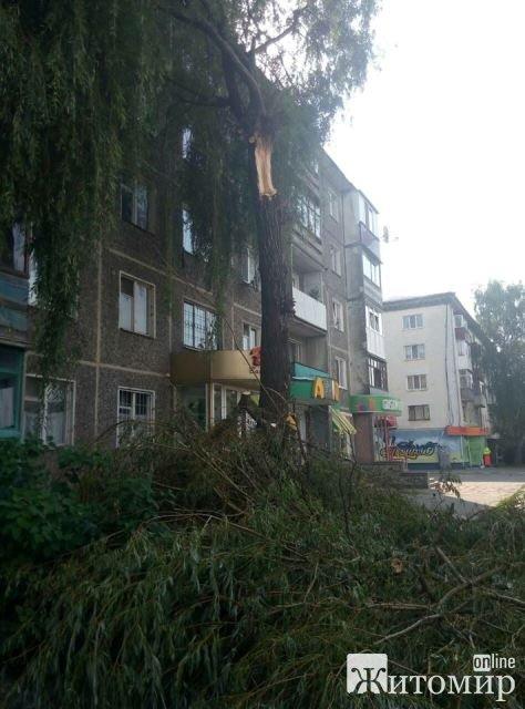 У Житомирі на вул. Небесної Сотні масовий обвал дерев. ФОТО