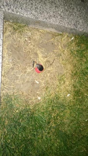 У житомирському сквері хтось повиривав лампи і тепер там б'є током. ФОТО
