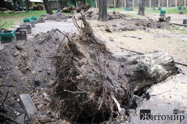 У сквері на Лятошинського зрізані старі дерева замінять новими сакурами