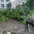 У Житомирі по вул. Котовського падає гілля дубів. ФОТО