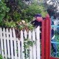 Гніздо шершнів  було знищене у с. Іскорость Коростенського району