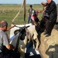 У Житомирській області загін бійців ДСНС рятував корову. ФОТО